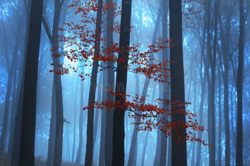 Floresta místico nevoenta durante a queda fotografia de stock royalty free