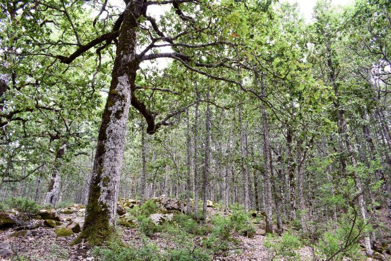 Floresta mediterrânea imagens de stock royalty free