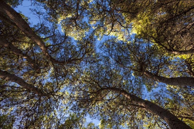 Floresta mediterrânea