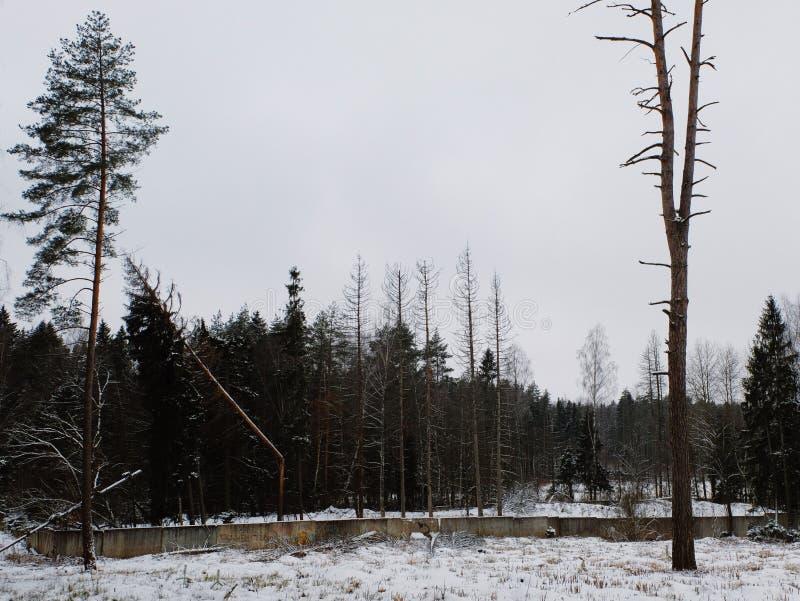 Floresta melancólica em Rússia imagem de stock