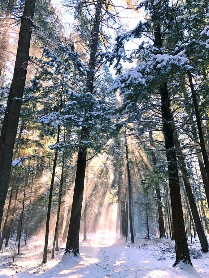 Floresta memorável branca da área da conservação fotos de stock