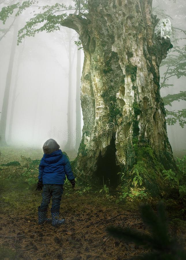 Floresta misteriosa foto de stock royalty free