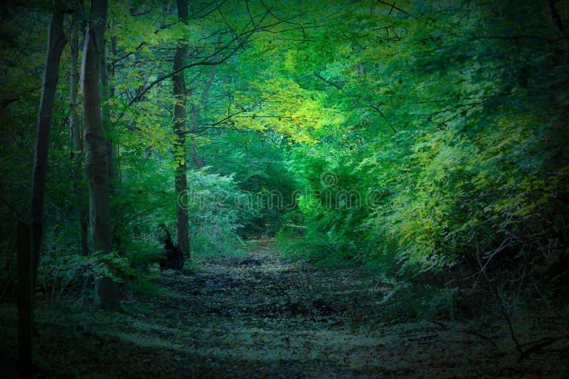 Floresta misteriosa imagens de stock royalty free