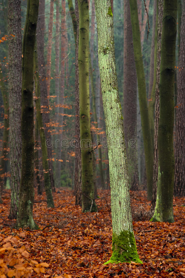 Floresta misteriosa. imagem de stock