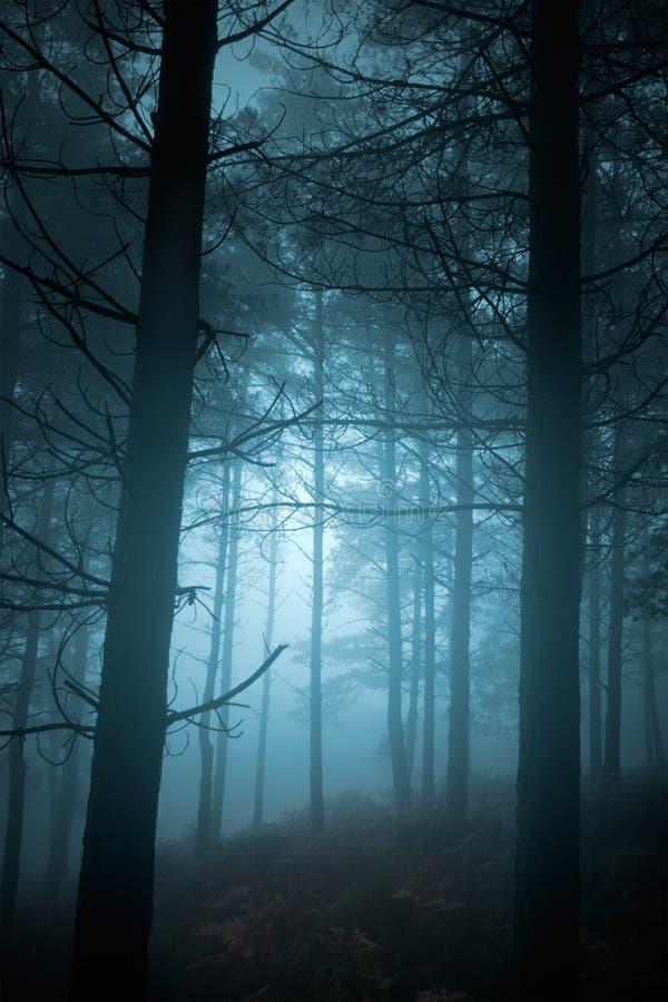 Floresta misteriosa imagens de stock
