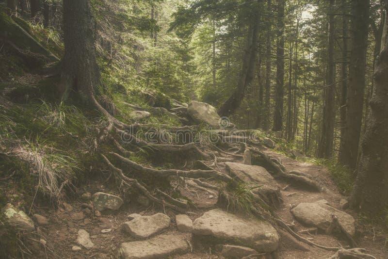 Floresta misteriosa bonita com as grandes pedras musgosos fotos de stock