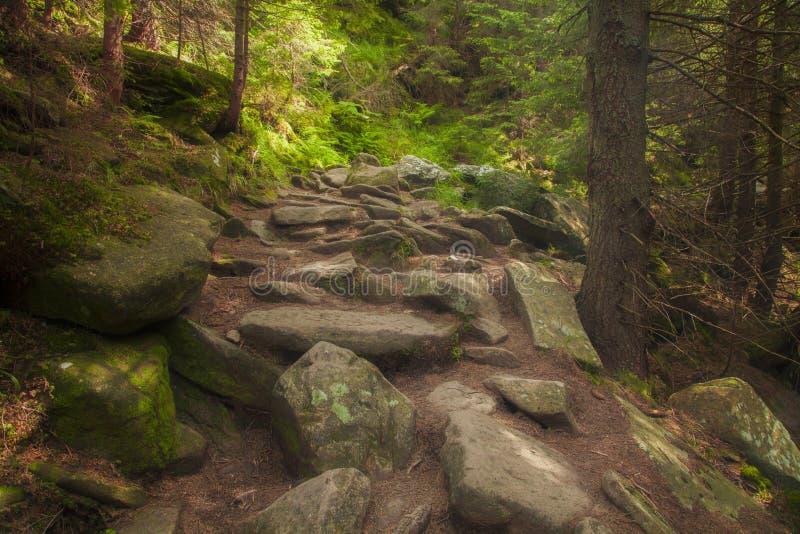 Floresta misteriosa bonita com pedras musgosos imagem de stock