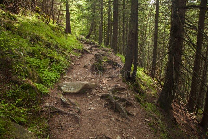 Floresta misteriosa bonita com um passeio imagem de stock
