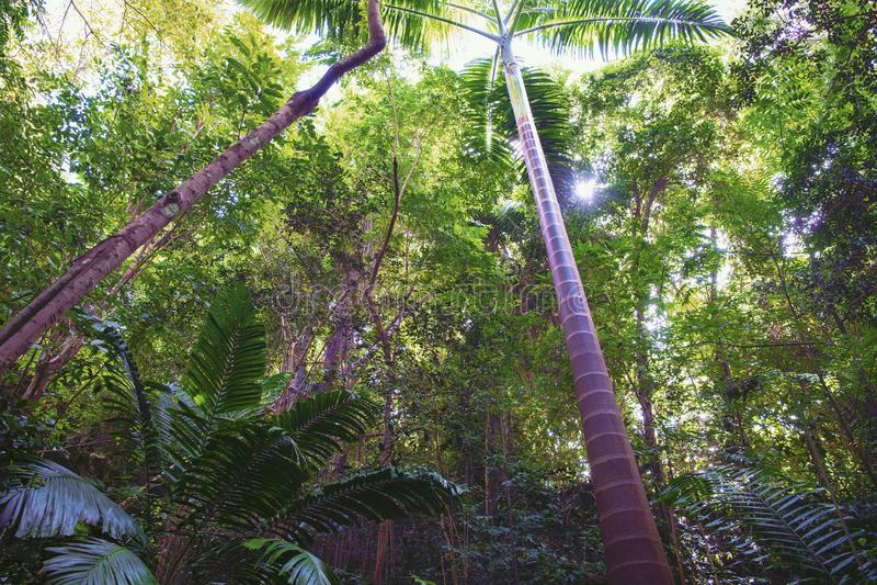 Floresta misteriosa da selva nos Tropes imagens de stock