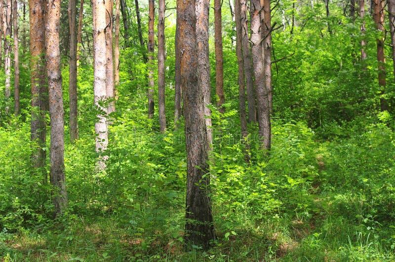 Floresta misturada imagem de stock