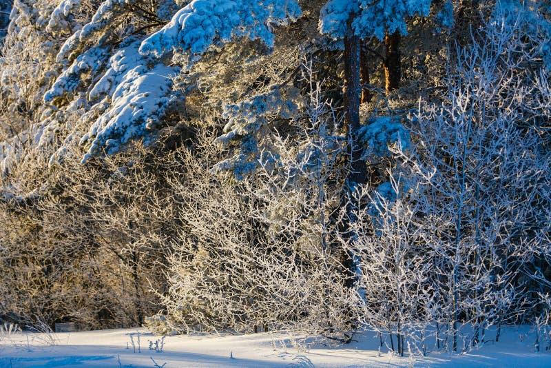 Floresta misturada coberta com a camada grossa da neve Paisagem do inverno fotos de stock royalty free