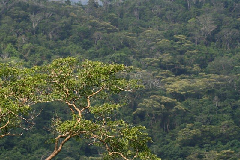 Floresta montane tropical foto de stock