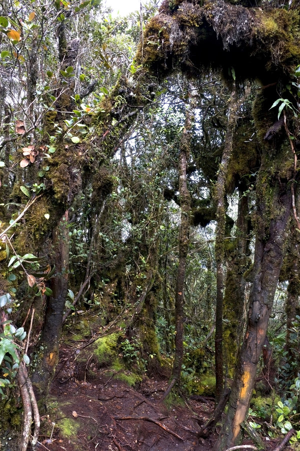 A floresta Mossy a mais velha do mundo imagens de stock