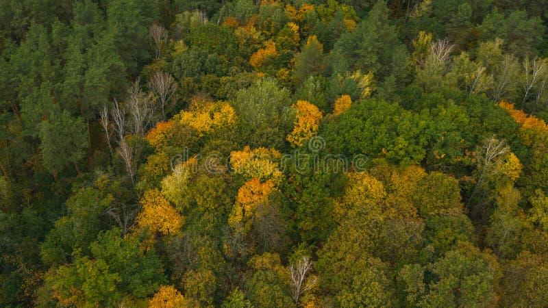 Floresta multicolorida no dia do outono foto de stock royalty free