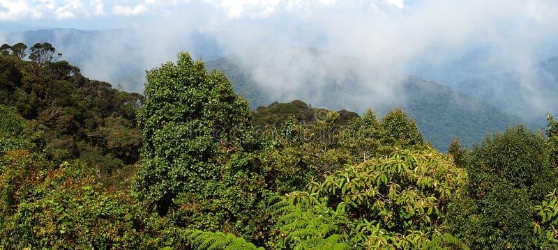Floresta musgoso, Gunung Brinchang fotos de stock