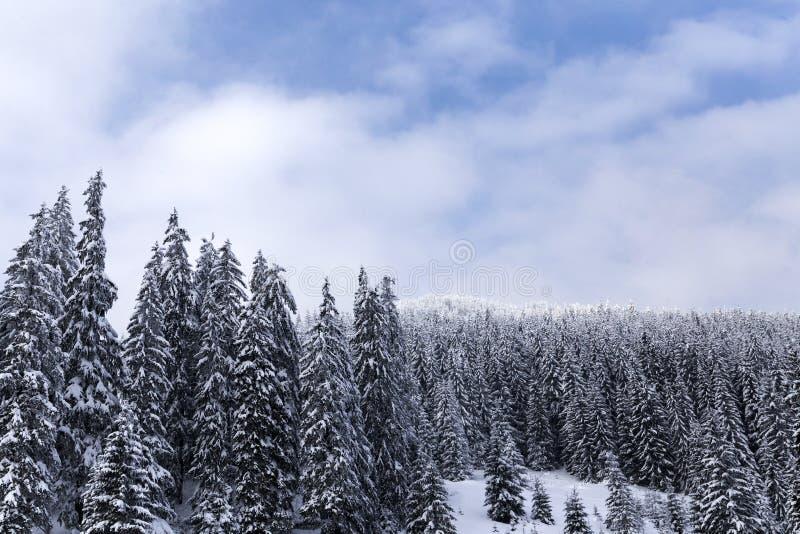 Floresta na estação do inverno em Romênia fotos de stock royalty free