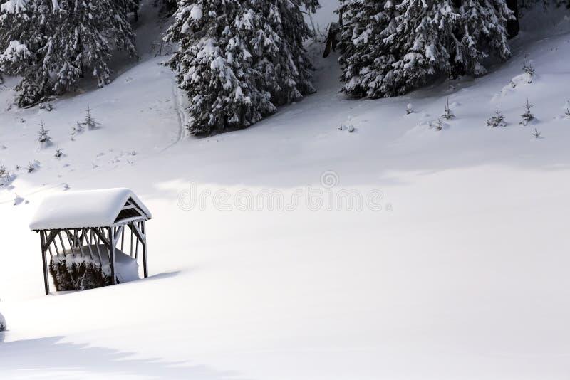 Floresta na estação do inverno na montanha de Carpathians do Romanian foto de stock royalty free