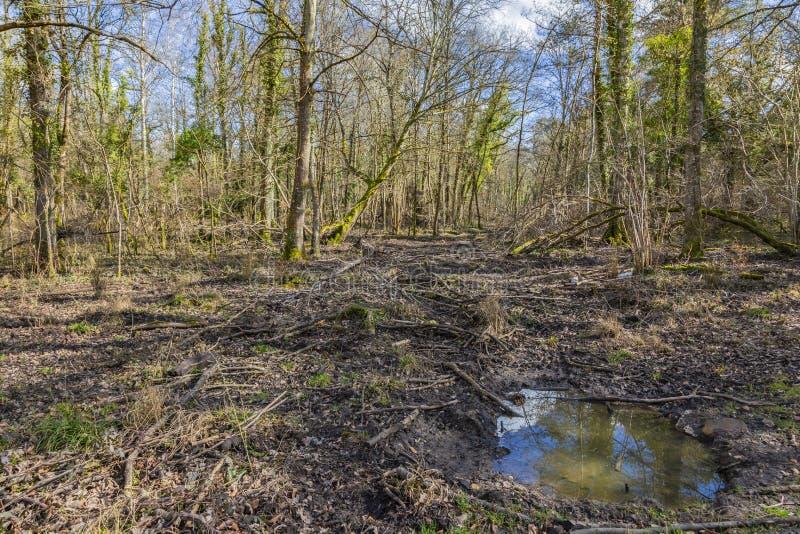 Floresta na mola fotos de stock