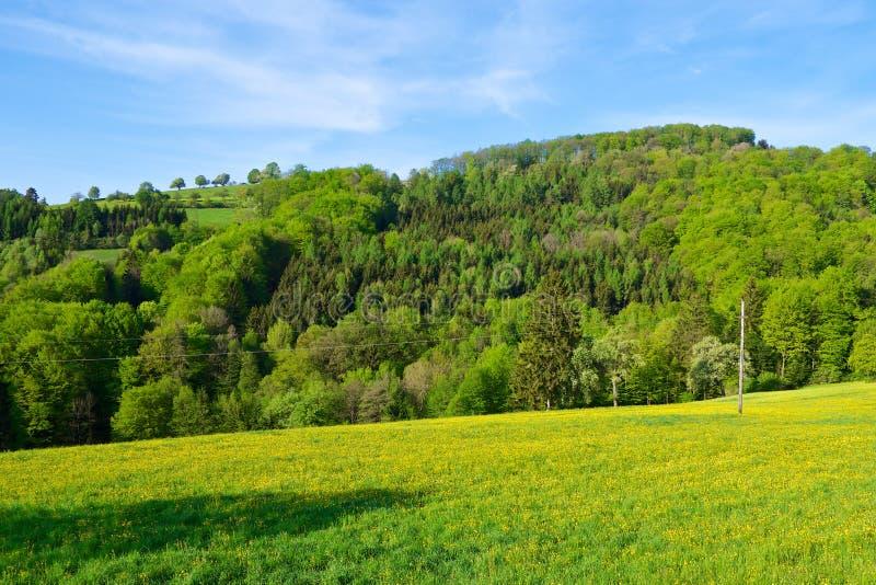 Download Floresta na mola imagem de stock. Imagem de ensolarado - 26523245