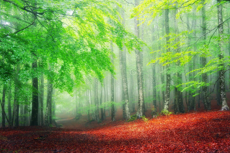 Floresta na mola imagem de stock
