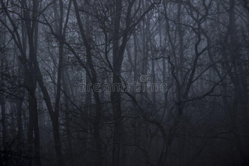 Floresta na névoa imagem de stock