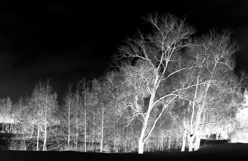 Floresta na noite fotografia de stock