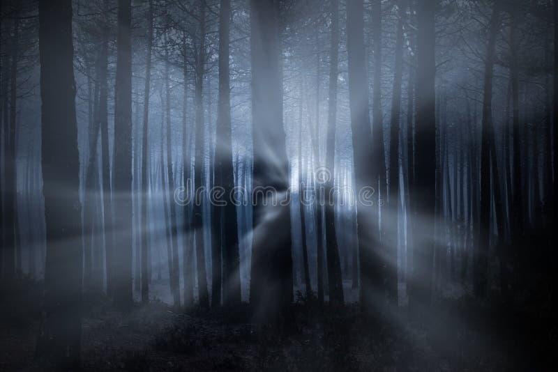 Floresta na noite fotos de stock