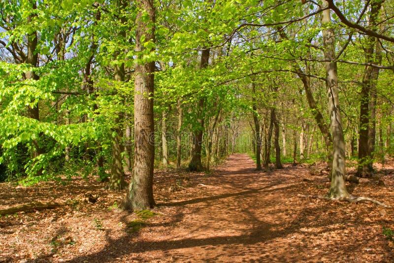 Floresta na primavera fotos de stock royalty free