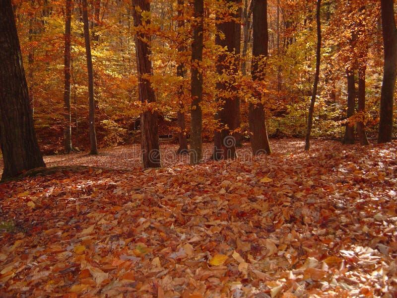 Download Floresta na queda imagem de stock. Imagem de nave, árvores - 529293