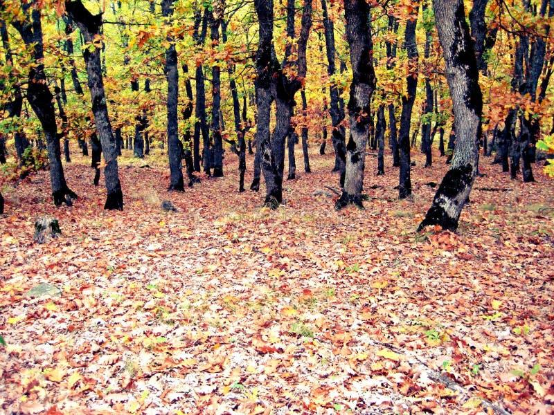 Floresta na queda fotos de stock royalty free