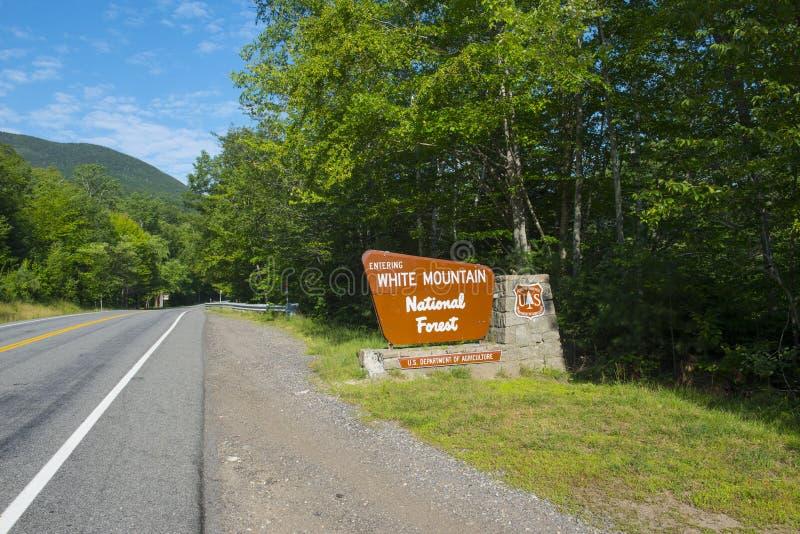 Floresta nacional da montanha branca, New Hampshire, EUA fotos de stock