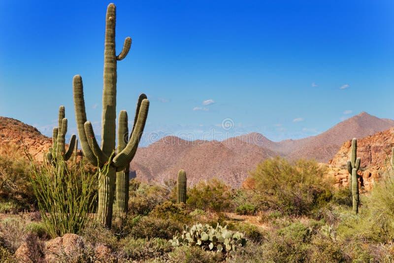 Floresta nacional de Tonto, o Arizona imagens de stock