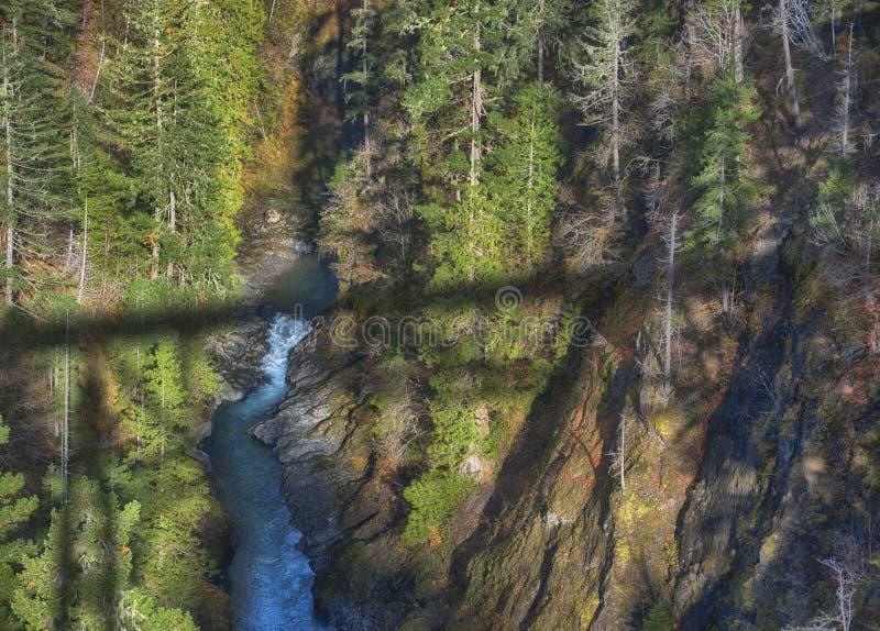 Floresta nacional olímpica imagens de stock royalty free