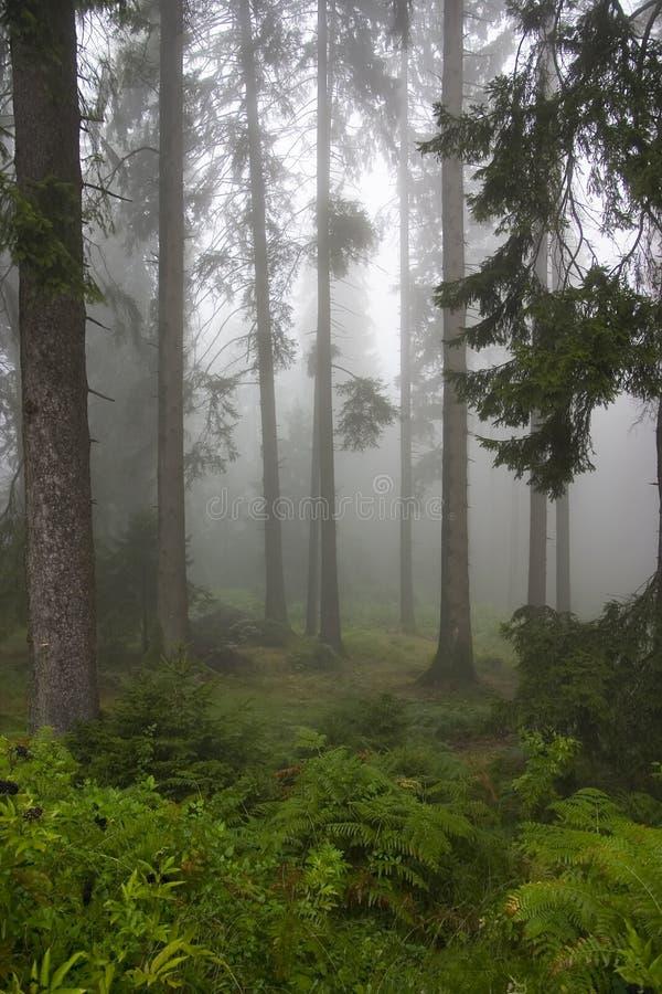 Floresta nas névoas fotos de stock