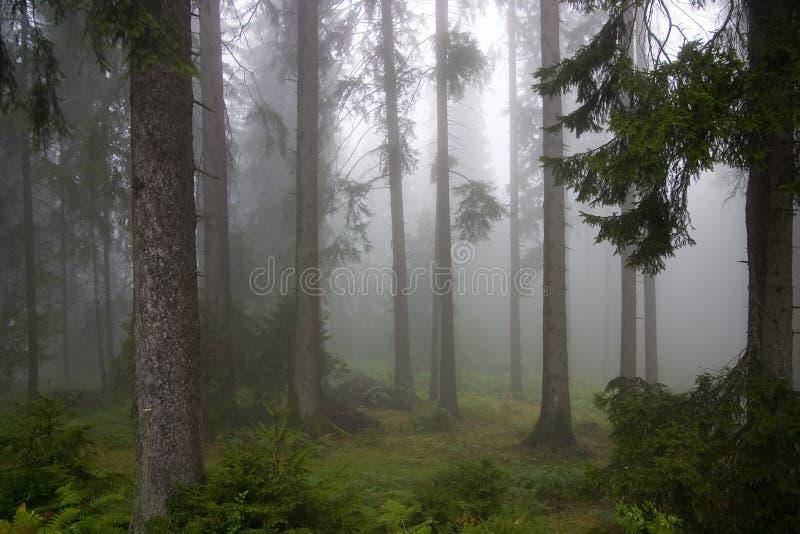 Floresta nas névoas foto de stock
