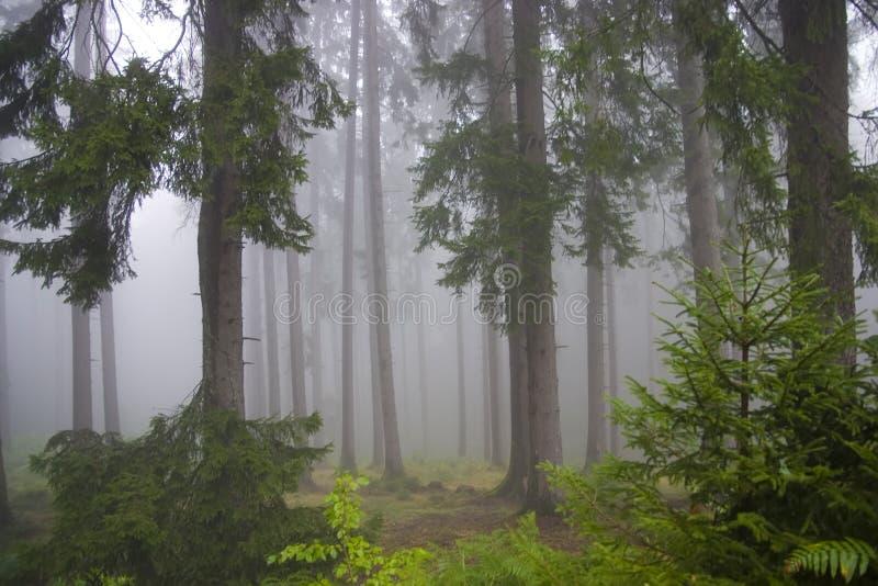 Floresta nas névoas fotos de stock royalty free