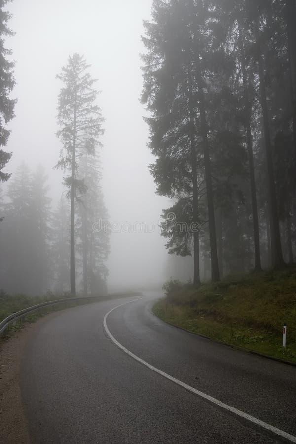 Floresta nas névoas fotografia de stock