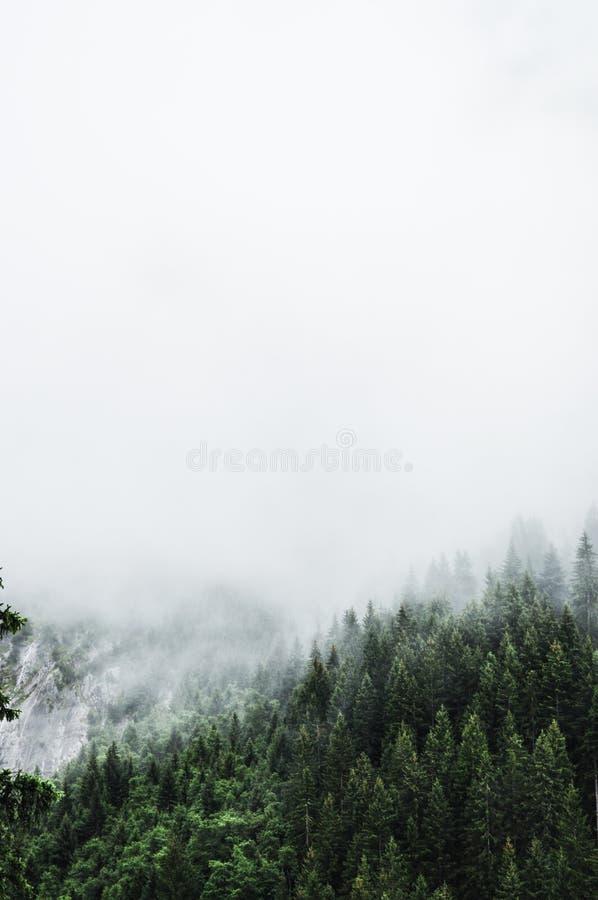 Floresta nebulosa fotografia de stock