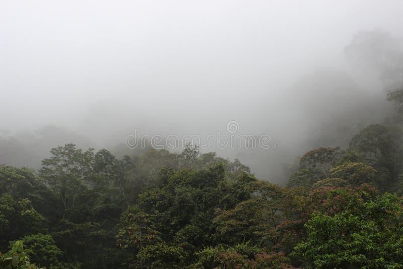 Floresta nebulosa imagens de stock royalty free