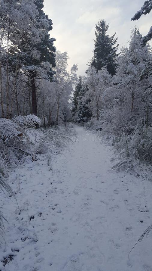 Floresta nevado fotografia de stock