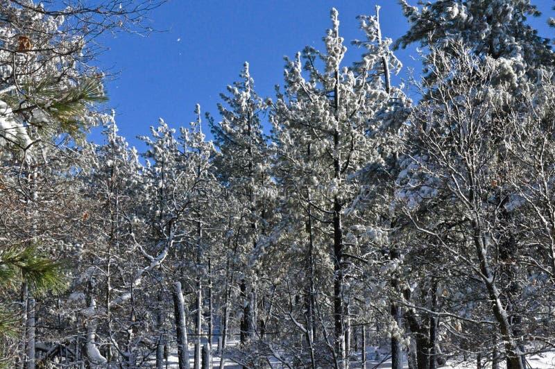 Floresta nevado fotos de stock