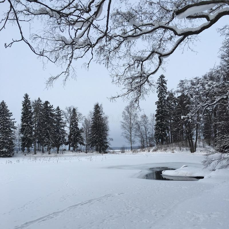 Floresta nevado fotografia de stock royalty free