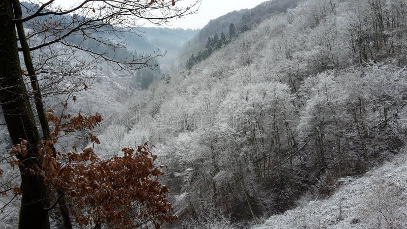 Floresta nevado imagem de stock royalty free