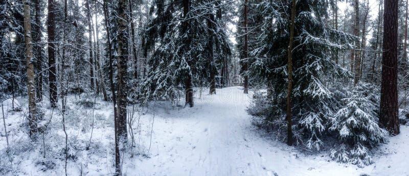 Floresta nevado foto de stock