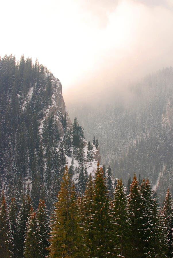 Floresta nevado da montanha imagem de stock