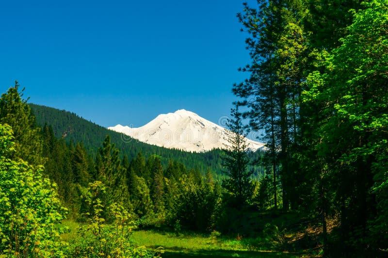 Floresta nevado do fundo da parte superior da montanha foto de stock royalty free