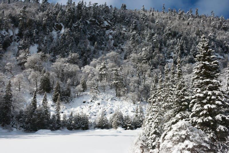 Floresta nevado do inverno foto de stock royalty free