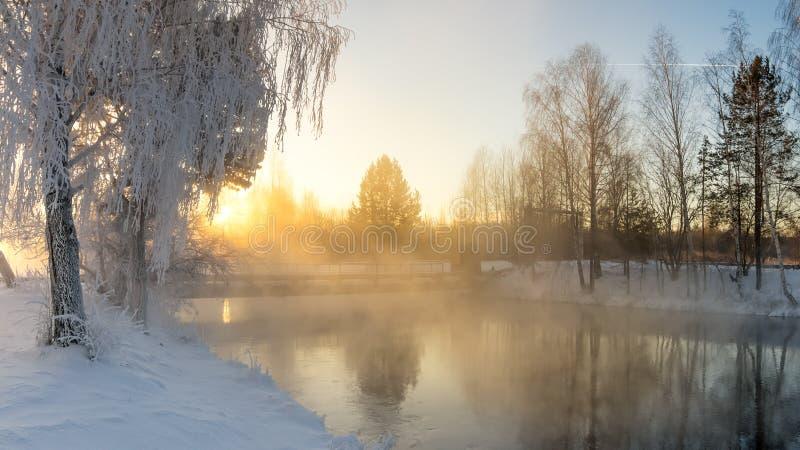Floresta nevado do inverno com arbustos e árvores de vidoeiro nos bancos do rio com névoa, Rússia, os Ural, janeiro imagens de stock royalty free