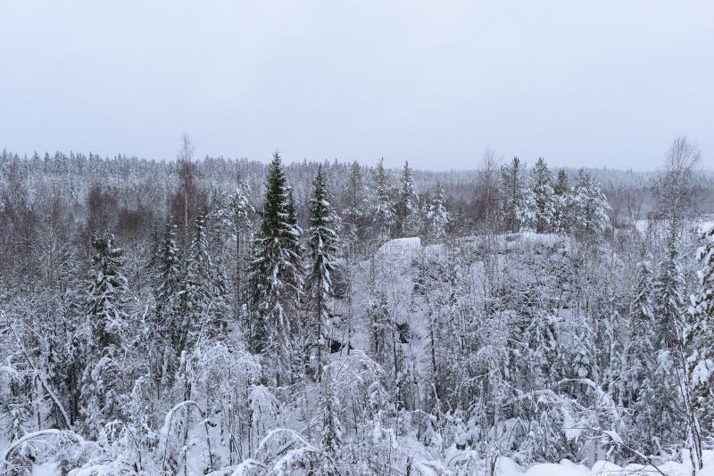 Floresta nevado do inverno em um desfiladeiro de pedra das árvores da área montanhosa dobradas na neve fotografia de stock