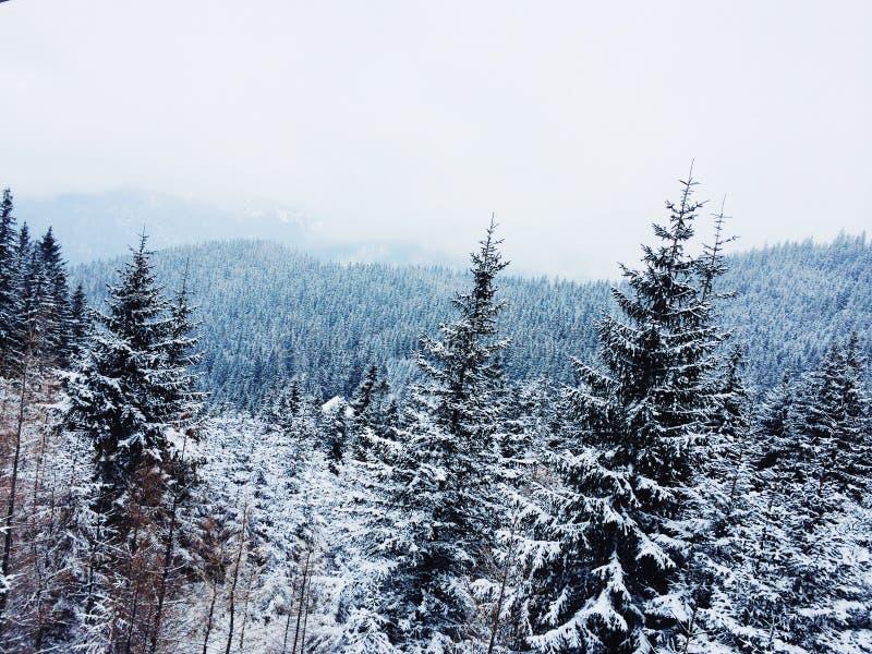Floresta nevado nas montanhas foto de stock royalty free